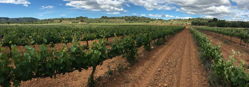 Ruta del Vino Castellon