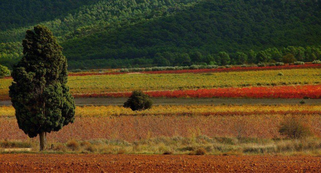 Terres dels Alforins